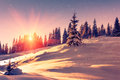 Beautiful Winter Landscape In Mountains. View Of Snow-covered Conifer Trees And Snowflakes At Sunrise. Merry Christmas And Happy N Stock Images - 78465224