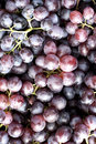 Red Wine Grapes Royalty Free Stock Images - 78483129