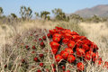 Spring In Mojave Desert Stock Photo - 7857700