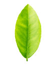 Green Leaf Lemon Isolated On A White Background Royalty Free Stock Photography - 78514917