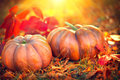Thanksgiving Day Background. Orange Pumpkins Over Nature Background Stock Images - 78542134
