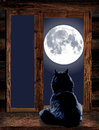 Cat Looks Through The Window At The Full Moon Royalty Free Stock Images - 78572289