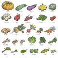 Vector Big Set Different Colored Ripe Vegetables Stock Image - 78577921