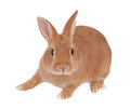 Rabbit Stock Images - 78589524