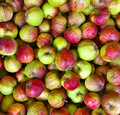Apples For Food Industry. Stock Photography - 78626792
