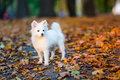 Cute White Puppy Royalty Free Stock Photo - 78663605