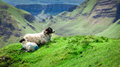 View To Sheeps In Quiraing, Isle Of Skye, Scotland Stock Image - 78709821