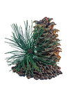 Siberian Pine Cones And Nutlets Royalty Free Stock Photos - 78840558