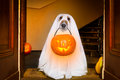 Halloween  Ghost  Dog Trick Or Treat Stock Photo - 78844450