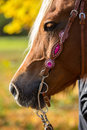 Western Bridle Royalty Free Stock Images - 78846199