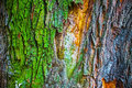 Colorful Bark Of Old Oak Tree, Abstract Nature Background Royalty Free Stock Images - 78888029