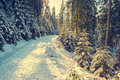 Road Between Snow Covered Pine Trees Stock Photo - 78889220