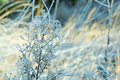 The First Frosts Stock Images - 79044054
