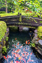 Colorful Japanese Koi Carp Fish In A Pond Stock Photos - 79087903