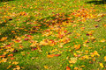 Dead Autumn Fall Leaves Season Laying Ground Grass Orange Brown Royalty Free Stock Photos - 79121568