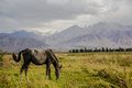 The Horse In The Wild Area Of Beautiful Kirgizstan Royalty Free Stock Photos - 79126578