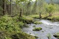 Mountain Stream Flowing Through The Forest Stock Images - 79146064
