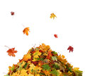 Pile Of Autumn  Colored  Leaves Isolated On White Background. Royalty Free Stock Photography - 79168667