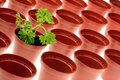 Parsley And Flowerpots. Stock Images - 7923254