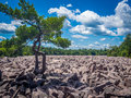 Boulder Field In Hickory Run State Park Royalty Free Stock Photos - 79223458