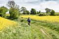 Moutain Biker In A Rapeseed Field Royalty Free Stock Photos - 79315188