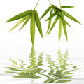 Bamboo Leaves Stock Image - 7942851