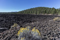 Lava Flow Forest At Sunset Crater National Monument Stock Images - 79401794