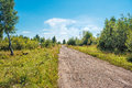 Dirt Road In The Woods Royalty Free Stock Photos - 79501078
