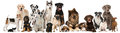 Group Of Breed Dogs Royalty Free Stock Photos - 79506628