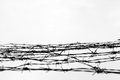 Fencing. Fence With Barbed Wire. Let. Jail. Thorns. Block. A Prisoner. Holocaust. Concentration Camp. Prisoners Royalty Free Stock Image - 79566006