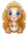 Cute Baby Hedgehog Sitting  On White Background Stock Photography - 79572682