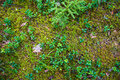 Forest Soil With Grass Royalty Free Stock Images - 79579679