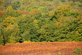 Ashdown Forest In Autumn Stock Image - 79652961