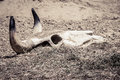 Skull In The Dust Stock Images - 79681544