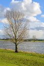 Tall Leafless Tree On The Banks Of A Wide River Royalty Free Stock Photo - 79733865