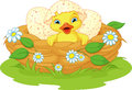 Duckling Stock Image - 79746281