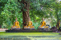 Buddhas Old Beneath Trees. Stock Image - 79748061