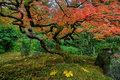 Japanese Maple Tree In Autumn Stock Photos - 79771953