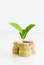 Little Plant Sprouting From Pile Of Coins Stock Photos - 79809943