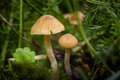 Fairy Wallpaper With Little Mushrooms Royalty Free Stock Image - 79836436