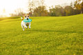 Dog Running On Green Grass Stock Photography - 79870772