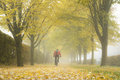 Autumn Alley With Fallen Leaves And Mist. Royalty Free Stock Image - 79927216