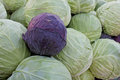 Green And Red Cabbage On The Market Stock Images - 79936404