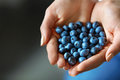 Healthy Organic Food. Woman Hands Full Of Fresh Ripe Blueberries Stock Image - 79972521