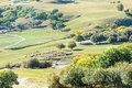 Overlooking White Birch And Sheep On The Hillside Stock Images - 79988054