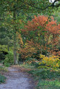 Woodland Walk In Beth Chatto&x27;s Gardens Royalty Free Stock Image - 80032596