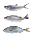 Fish Collection Stock Images - 80053864