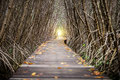 Tree Tunnel, Wooden Bridge In Mangrove Forest Royalty Free Stock Photo - 80073185