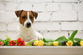 Beautiful Dog With Tulips Stock Images - 80098194