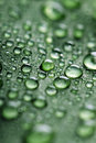 Leaf With Drops Of Water Royalty Free Stock Image - 8016166